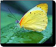 La leçon du papillon >>> Cliquez ici <<<
